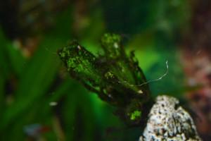 Planta con alga filamentosa