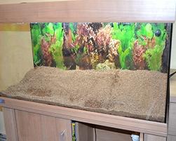 Cambio de grava en acuario con peces